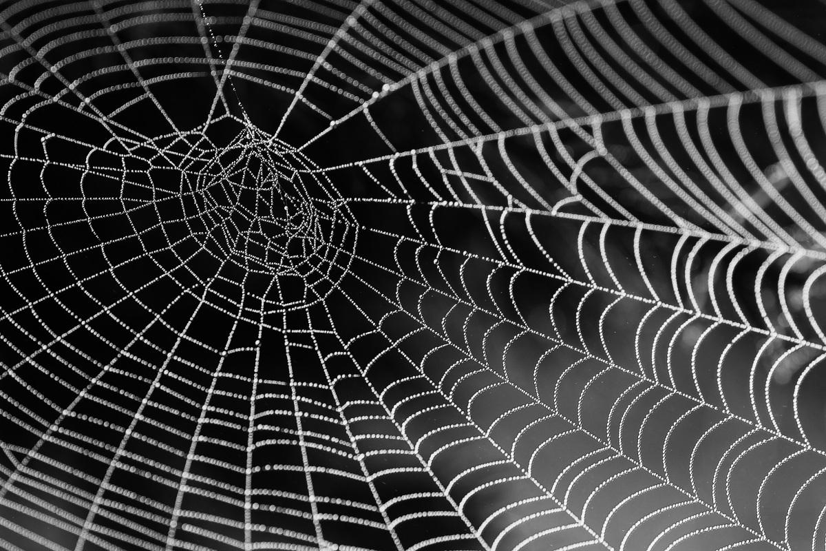 Using Google Cloud AutoML to Classify Poisonous Australian Spiders