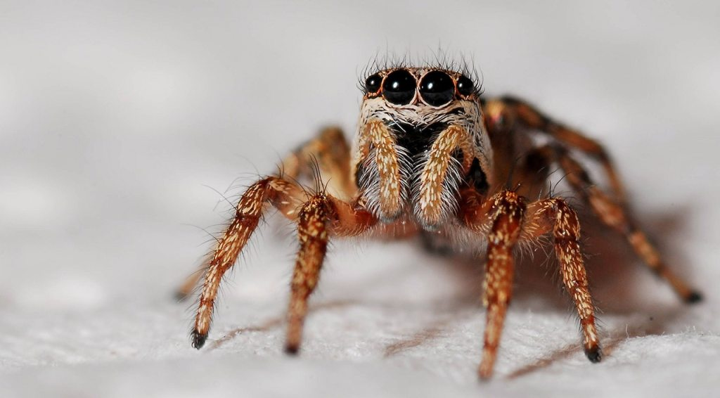 Super-cute spider, aww.